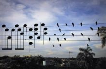 Birds on the Wires - Jarbas Agnelli