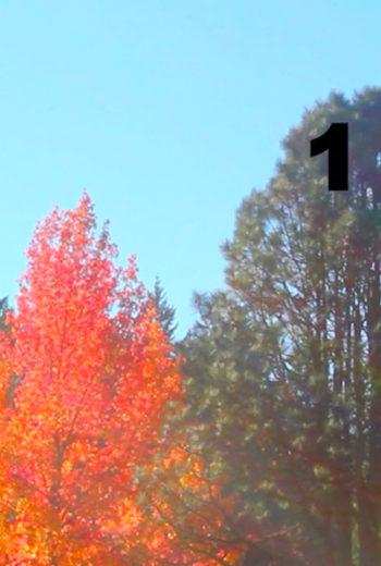 Dustin Morrow - Treetops
